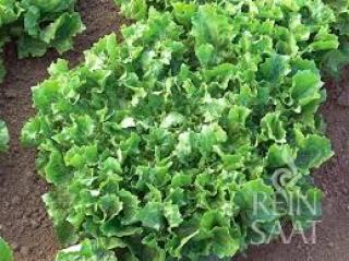 Salāti lapu